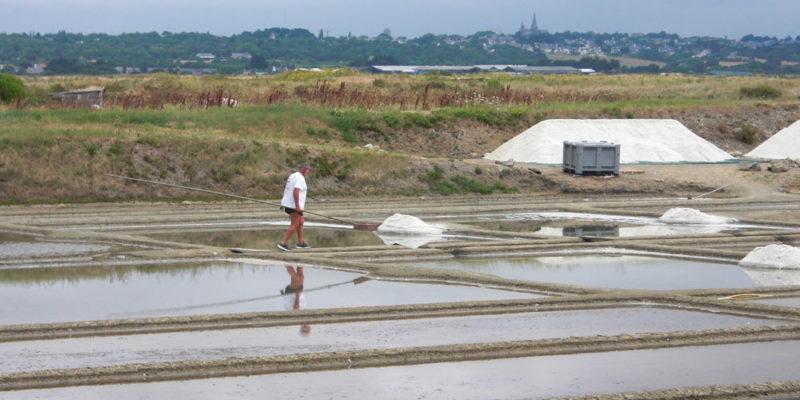 Salzbecken in der Guérande