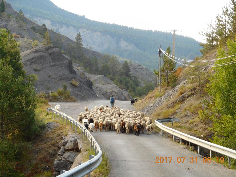 Schafherde unterwegs in der Nähe von Authon